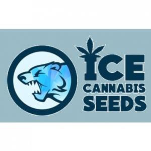 ICE Cannabis Seeds