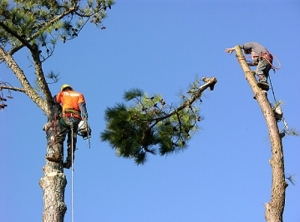 Thomas R. Smith Tree Surgeons