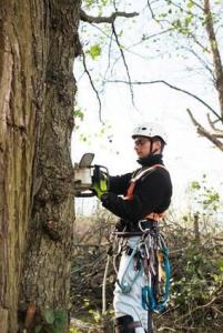 Webster Groves Tree Service