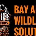 Bay Area Wildlife Solutions