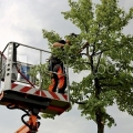 Raleigh Tree Service Pros