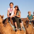 arabian desert safari offer