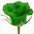 Green Rose Health care ltd