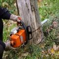 Fairfield Tree Services