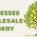 Tennessee Wholesale Nursery