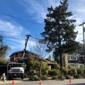 Econo Tree Service, Inc