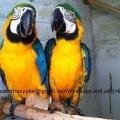 Family Parrots Home