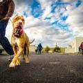 Joey Luke's Dog Training